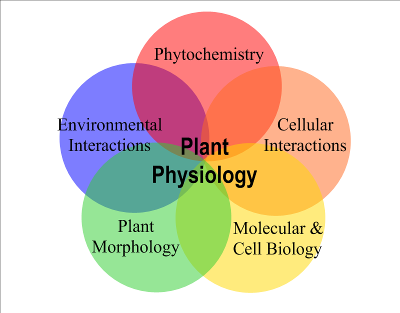 CBT 350: Plant Physiology