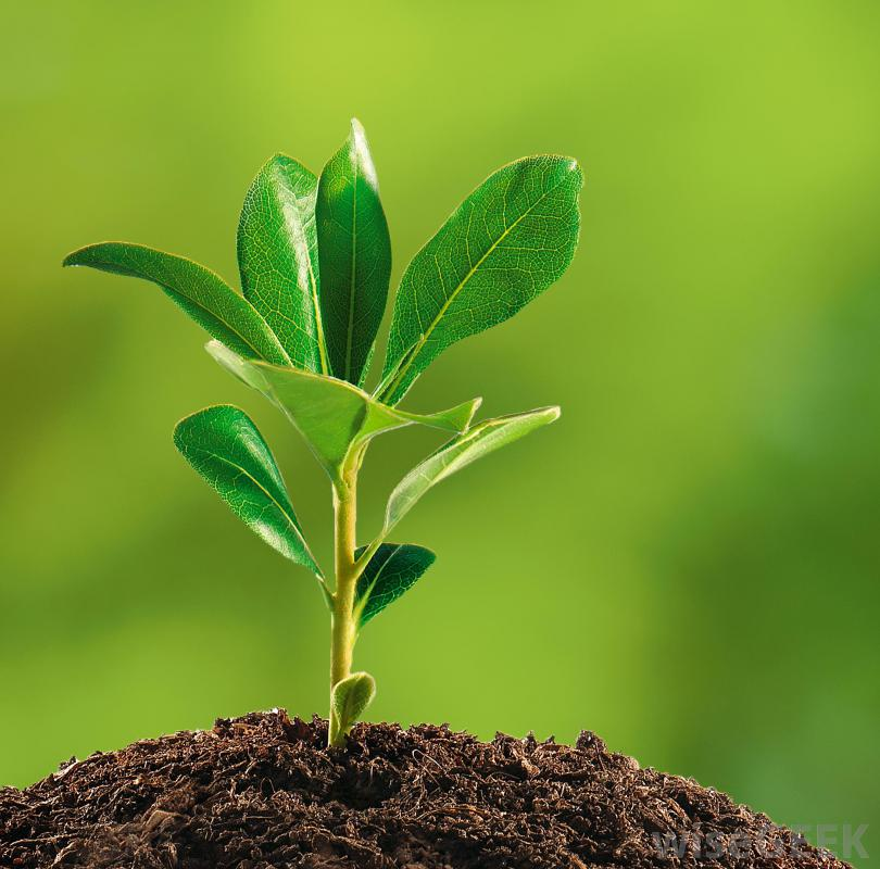 CBT 465: Plant Ecology